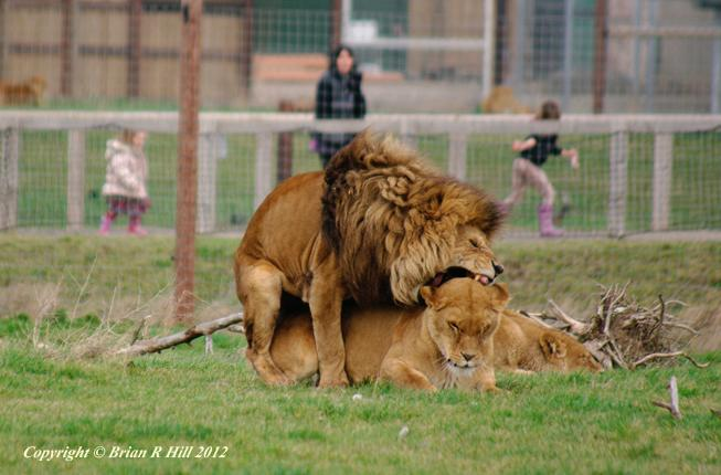 Yorkshire_Wildlife_Park_014
